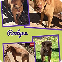 Adopt A Pet :: Rozylnn - Scottsdale, AZ