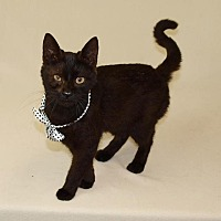 Adopt A Pet :: Miley - Jackson, MS