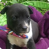Adopt A Pet :: Baker - Hartford, CT