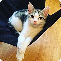 Adopt A Pet :: Maurice - Jersey City, NJ