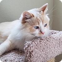 Adopt A Pet :: James William - Davis, CA