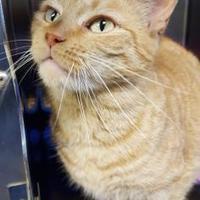 Adopt A Pet :: Tropicana - Wellsville, NY