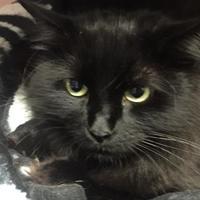 Adopt A Pet :: Zena - Thunder Bay, ON