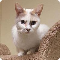 Adopt A Pet :: Ellie - Mission Viejo, CA