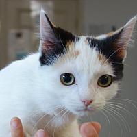 Adopt A Pet :: Fugi - Greenfield, IN