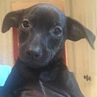 Adopt A Pet :: Vivian - Vancouver, BC