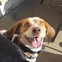 Adopt A Pet :: McCoy! - Akron, OH