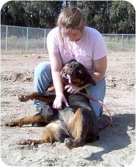 Rottweiler Dog for adoption in Santa Barbara, California - Maya