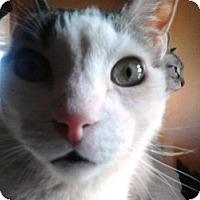 Adopt A Pet :: Cooper - Denton, TX