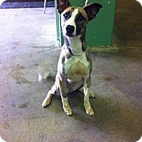 Adopt A Pet :: Gretchen - Peru, IN