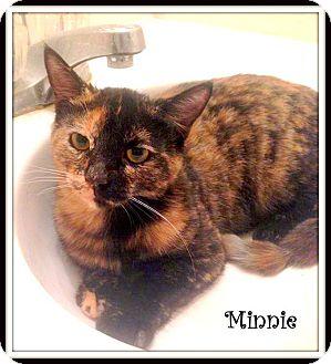 Domestic Shorthair Cat for adoption in Yuba City, California - Minnie