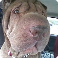 Adopt A Pet :: Lana - Houston, TX