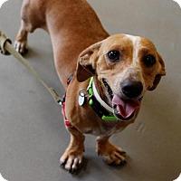 Adopt A Pet :: Alfonzo - Atlanta, GA