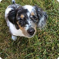 Adopt A Pet :: Magpie - Spring City, TN