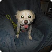 Adopt A Pet :: Shelton  -Adopted! - Kannapolis, NC