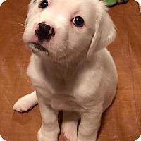 Adopt A Pet :: Large Marge - Atlanta, GA