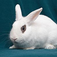 Adopt A Pet :: Pyrite - Alexandria, VA