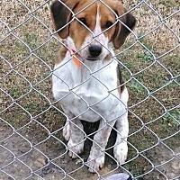 Adopt A Pet :: Trixie - Mount Holly, NJ
