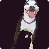 Adopt A Pet :: Jordan **URGENT** - Berkeley, CA