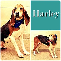 Adopt A Pet :: Harley -ADOPTED - Ontario, ON