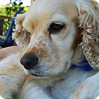 Adopt A Pet :: Skylar - Sherman Oaks, CA
