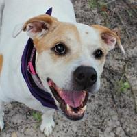 Adopt A Pet :: Layla - Gainesville, FL