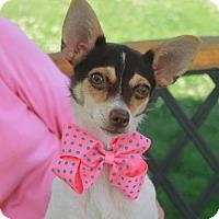 Adopt A Pet :: Emmie-PENDING - Garfield Heights, OH
