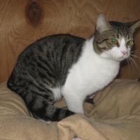 Adopt A Pet :: Xander - Hopkins, SC