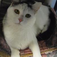 Adopt A Pet :: Ellie - Oshkosh, WI