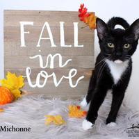Adopt A Pet :: Michonne - Luling, LA