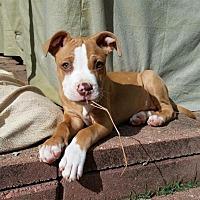 Adopt A Pet :: Drake - Shelbyville, KY