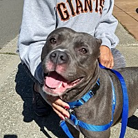 Adopt A Pet :: Candy - San Francisco, CA