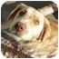 Photo 4 - Golden Retriever Mix Dog for adoption in Columbus, Nebraska - Missy