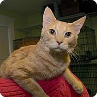 Adopt A Pet :: Dionne - Winston-Salem, NC