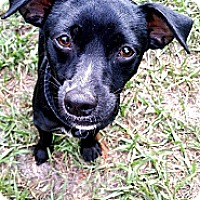 Adopt A Pet :: Clyde - Largo, FL