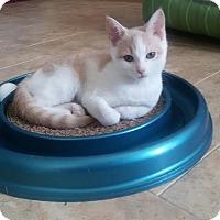Adopt A Pet :: Minka - McDonough, GA