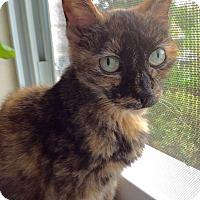 Adopt A Pet :: Duchess-Adoption Pending! - Colmar, PA