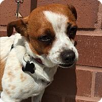 Adopt A Pet :: Barnaby - Los Angeles, CA