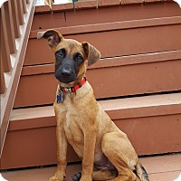 Adopt A Pet :: HAILEY - Middlesex, NJ