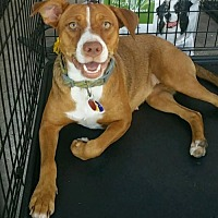 Adopt A Pet :: Molly - Abbeville, LA
