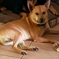 Adopt A Pet :: Bobby - Miami, FL