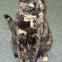 Adopt A Pet :: Samantha - San Jose, CA