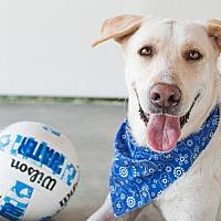 Adopt A Pet :: Beau - Nanaimo, BC