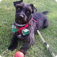 Adopt A Pet :: Benny - San Diego, CA