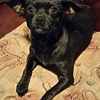 Adopt A Pet :: Jenni - Houston, TX