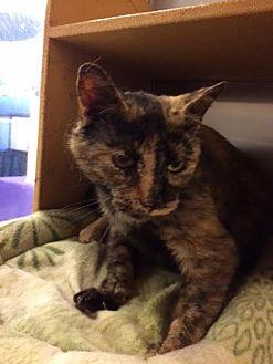 Domestic Shorthair Cat for adoption in Byron Center, Michigan - Premala