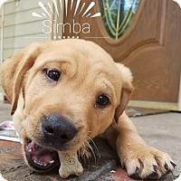 Adopt A Pet :: Simba - Huntsville, AL