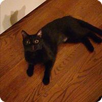 Adopt A Pet :: Tiki - Chicago, IL