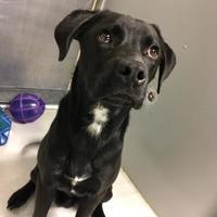 Adopt A Pet :: Umbro - Newton, IA
