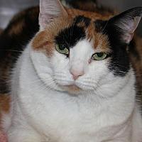 Adopt A Pet :: AUTUMN - Clayton, NJ